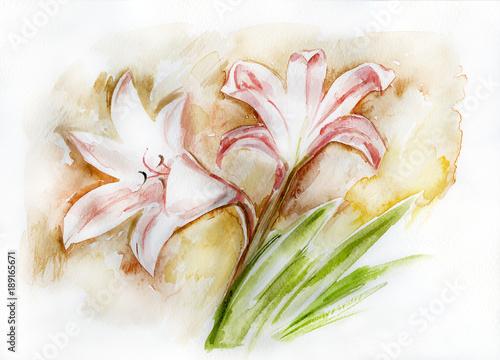 Kwiaty Amarilis