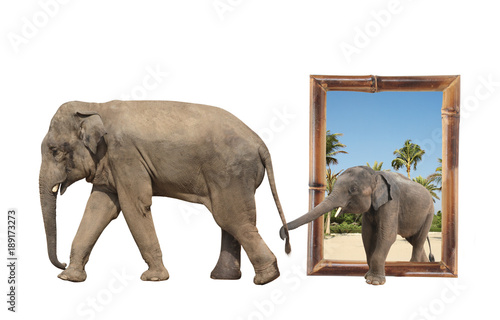 Family of elephant in bamboo frame with 3d effect
