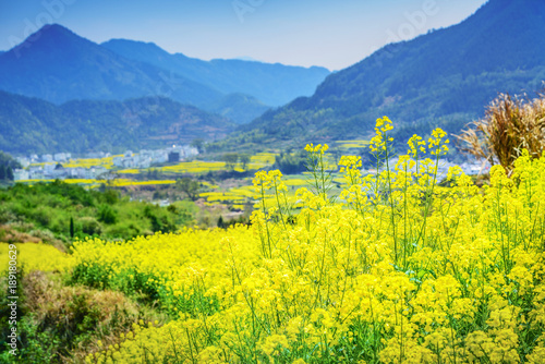 Photo Stands Yellow Landscape of Wuyuan County with Yellow oilseed rape field and Blooming canola flowers in spring. It's very quiet. People refer it to as the most beautiful village of China.