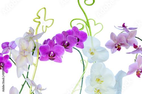 storczykowy-kwiat-na-bialym-tle