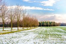 Green Field Under White Snow B...