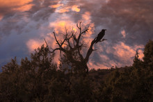 Silhouette Of A Crow And Tree ...
