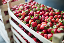 Close-up Image Of Fresh Strawb...