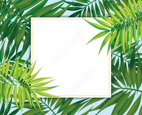 Palm leaves, Tropical Exotic plants Square frame, botanical ...