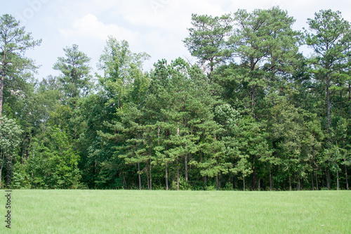 Spoed Foto op Canvas Khaki Trees and grass