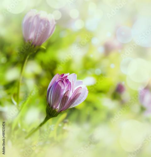 makro-niektorych-kwiatow-w-tej-dziedzinie