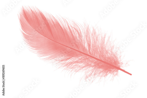 Fotomural coral pink feather on white background
