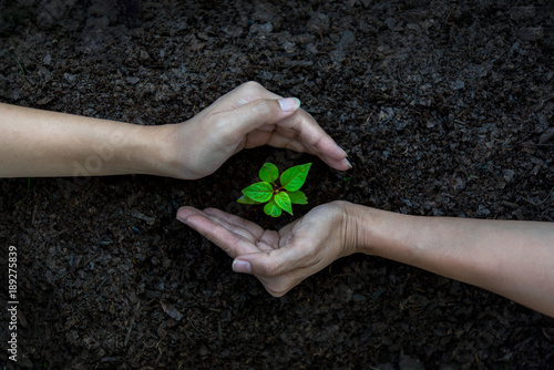 Fotografia  Hands Team Work protecting tree growing for reduce global warming earth