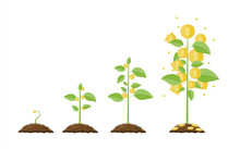 Growing Money Tree. Stages Of ...