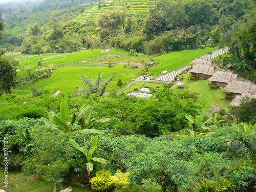 Beautiful rice fields in Bali, view of the rice field, green rice field, color of nature in Bali, beautiful landscape