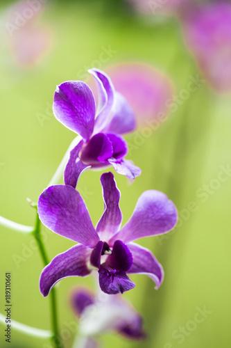 zakonczenie-lily-storczykowy-kwiat-w-ogrodzie-rozpraszajacy