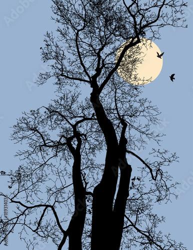 sylwetki-drzew-w-lesie-nocy