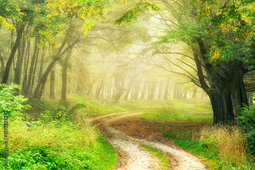 Garden Poster Road in forest Winding Dirt Road through Forest in the Warm Light of the Morning Sun