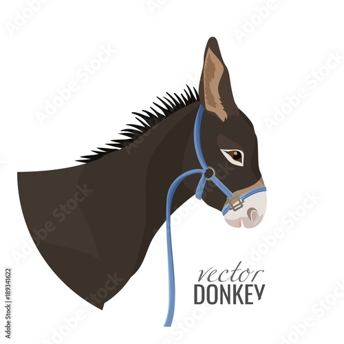 Adorable donkey head with black mane in blue harness Canvas Print