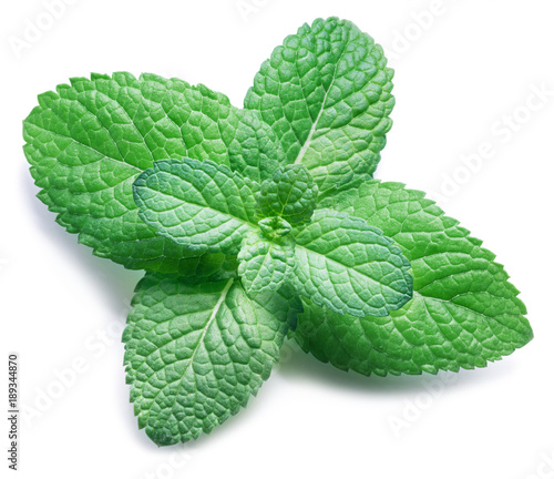 Spearmint or mint on white background. Top view.