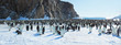 Panorama of Emperor penguin colony( aptenodytes forsteri)on the sea ice of Davis sea,Eastern Antarctica