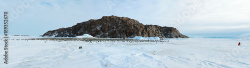Panorama of Emperor penguin colony( aptenodytes forsteri)on the sea ice of Davis Wallpaper Mural