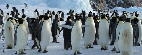 Foto auf Gartenposter Antarktika Panorama of Emperor penguin colony( aptenodytes forsteri)on the sea ice of Davis sea,Eastern Antarctica