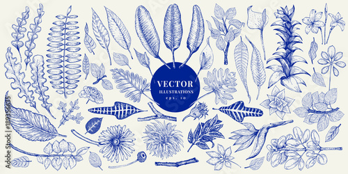 Vector botany collection. Retro hand drawn illustration set. Canvas