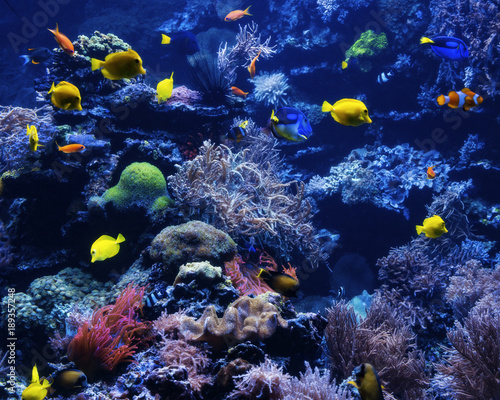Fotobehang Koraalriffen tropical Fish on a coral reef. Underwater coral fish