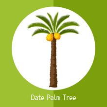 Date Palm Tree. Illustration Of Exotic Tropical Plant