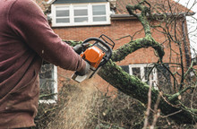 Arborist Chainsawing Pieces Of...
