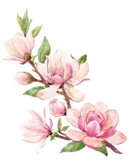 Obraz Watercolor magnolia floral composition