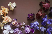 Bearded Irises In Various Colors