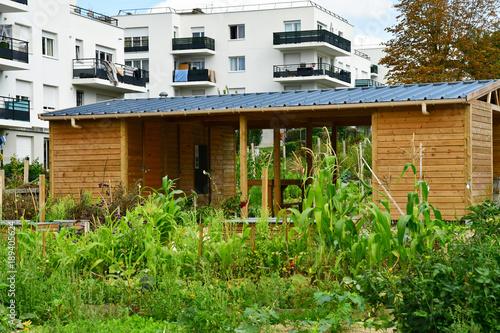 Les Mureaux; France - september 29 2017 : allotment garden Canvas Print