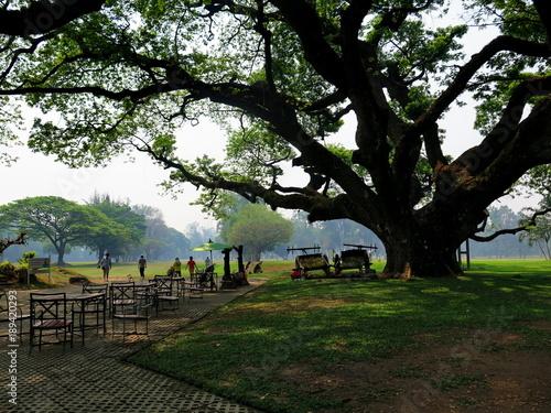 Big rain tree or East Indian Walnut (Leguminosaeor) in the ... Rain Garden Mobile Home on golf rain, home appliances rain, baby rain,