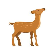 Graceful Fallow Sika Roe Deer,...