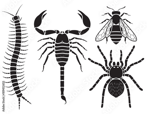Poisonous insects set. Vector Illustrations. Fotobehang