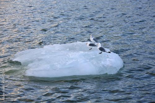 Foto op Aluminium Arctica Iceberg with resting seabirds