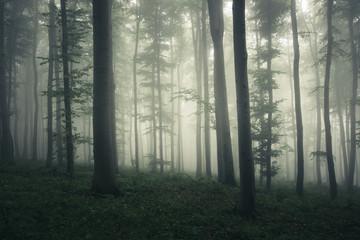 foggy woods background, fantasy landscape