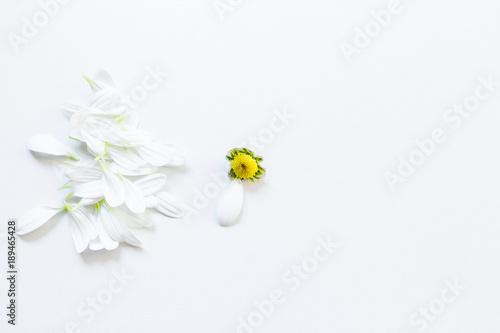 White flower without petals one petal left buy this stock photo white flower without petals one petal left mightylinksfo
