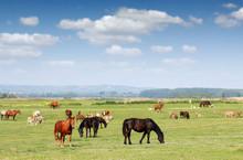 Farm Animals In Pasture Spring...