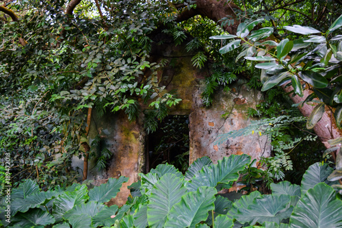 Poster Parc Naturel Abandoned House in Seychelles Jungles