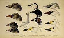 The Head Of The Bird