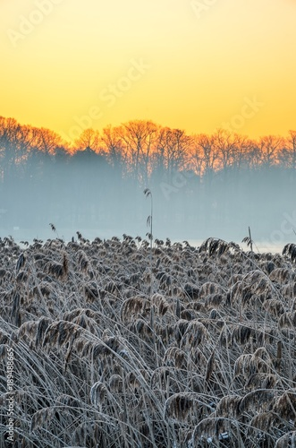 Fotobehang Zwavel geel Beautiful winter landscape. Dry frosted plants by the lake in the morning.