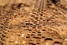 Bike Tire Tracks On Muddy Trai...