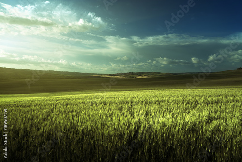 Foto auf Gartenposter Landschappen Green field of wheat in Tuscany, Italy