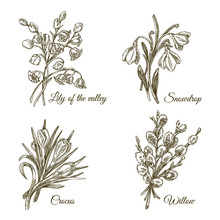 Beautiful Vintage Set Of Small Spring Bouquets. Lily Of The Valley, Snowdrop, Crocus And Willow Branch. Engraving Style. Vector Illustration.