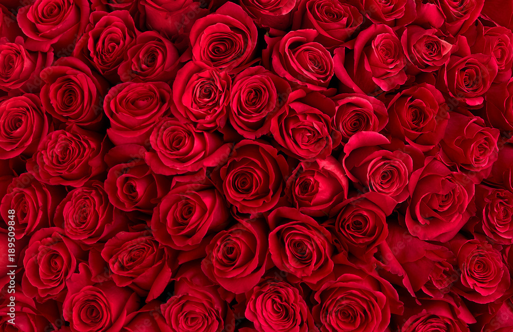 Fototapety, obrazy: Natural red roses background