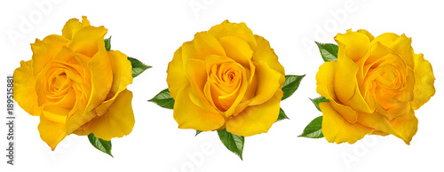 Tuinposter Roses Fresh beautiful yellow rose isolated on white background with clipping path