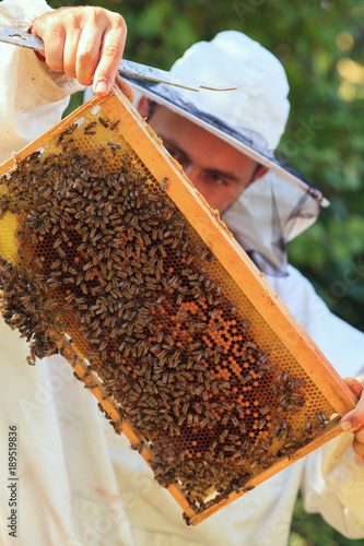 Poster Bee Beekeeper collecting honey selective focus on a honeycomb and bees