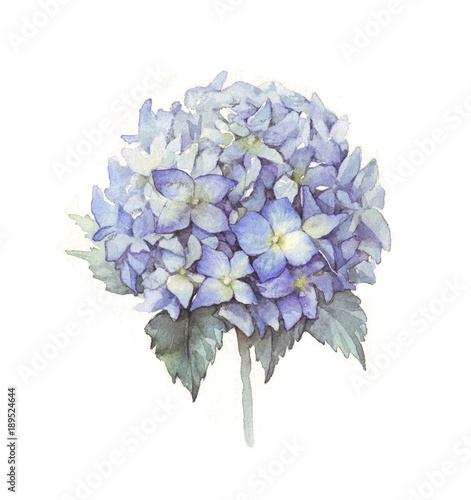 Tablou Canvas Hydrangea flower blue