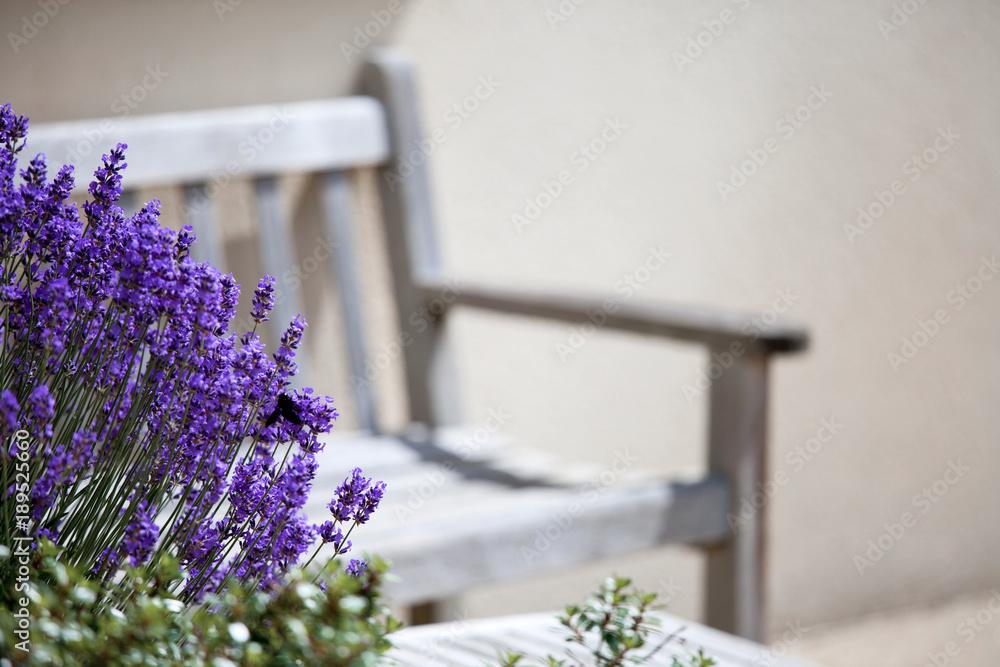 Maison > Jardin > Terrasse > Fleur > Lavande Foto, Poster ...
