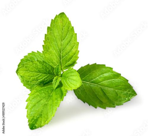 Obraz closeup of fresh spearmint leaves isolated on white background - fototapety do salonu