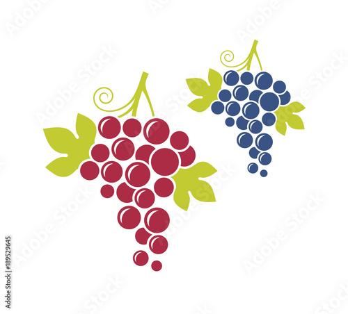 Czerwoni winogrona i błękitni winogrona. Świeża owoc z liśćmi na białym tle