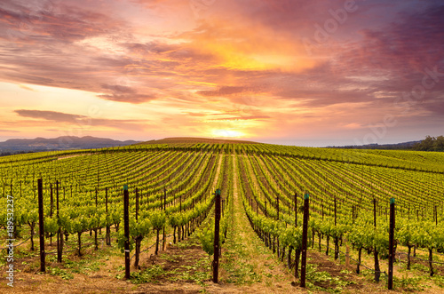 Spoed Foto op Canvas Wijngaard Napa Valley Wine Country Vineyards in Spring and Colorful Sunset